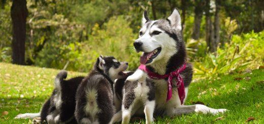 fattrice cani