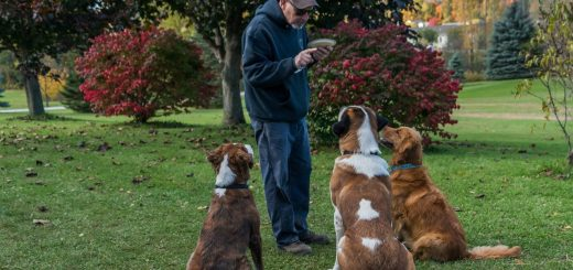 addestramento-cane